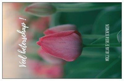 Geschenkkaartje 'Veel beterschap' Moge Allah je shifa schenken